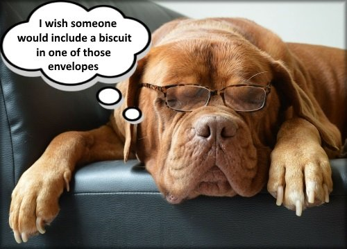 tired dog wearing glasses thinking about biscuits