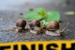 three snails concluding a race at a finish line