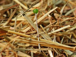 close-up of a needle in a haystack